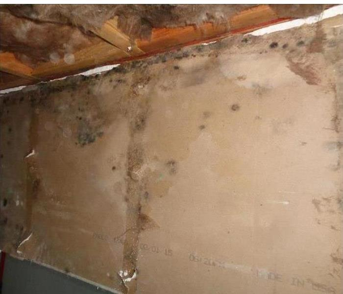Mold on brown wall